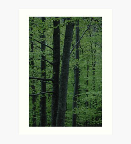 Light green woods Art Print