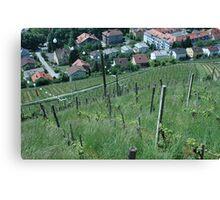 Vineyard towards town Canvas Print