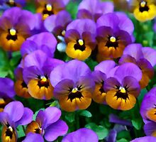 Little Purple Pansies Trimmed in Yellow Gold by SaraValor