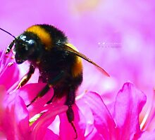 """"""" Swathed In A Bed Of Pink """" by Richard Couchman"""