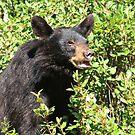 Black bear by zumi
