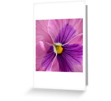 Pink Purple Pansy Flower Macro Greeting Card