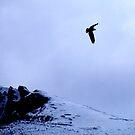 Over the Top by Jan Landers