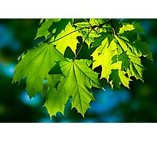 Tales From The Maple Wood Photographic Print