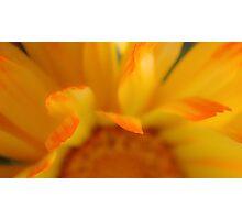 Tips Photographic Print