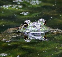 Croak by SuddenJim
