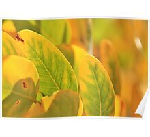 Autumn Leaves - Nature in Gold and Green Poster