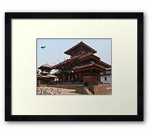 Kathmandu Temple Pigeons Framed Print