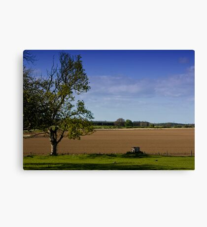 Northumberland Field Canvas Print