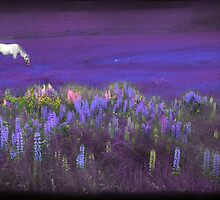 White Horse in a Violet Dream by Wayne King