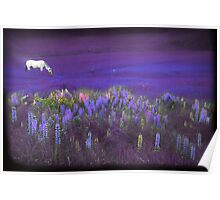 White Horse in a Violet Dream