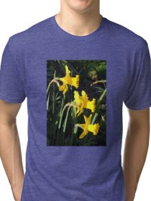 Chorus of Daffodils (Lent Lilies) Tri-blend T-Shirt