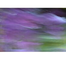 Violet souls on the flight Photographic Print