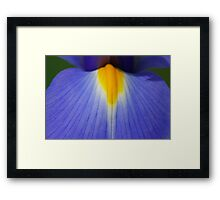 Blue and Yellow Tongue Framed Print