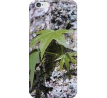 Big maple tree trunk with lichen and young spring green leaves. iPhone Case/Skin