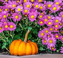 Pumpkin and Daisies by MPRPhoto
