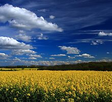 Field of Gold by Paul Bettison