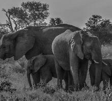 Elephant Family of Four by Deborah V Townsend