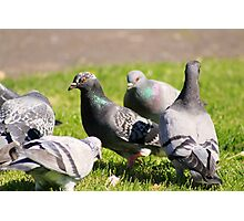 Pigeons in the park II Photographic Print