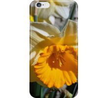yellow and white  daffodil flowers. floral photography. iPhone Case/Skin