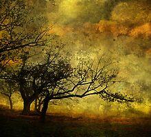 Quietude by Heather Prince