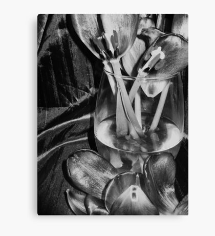 Tulips and petals,,,,,in bw Canvas Print