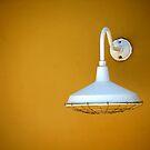 The White Light by Rosalie Scanlon