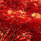 Alfred Nicholas in Autumn #2 by Anuja Manchanayake