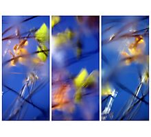 Beyond Blue - Triptych Photographic Print