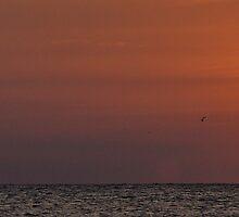 Sail Away by alanbrito
