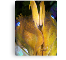 Giant Cuttlefish - Defensive Canvas Print