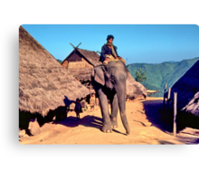 Village elephant Canvas Print