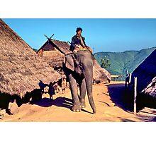 Village elephant Photographic Print