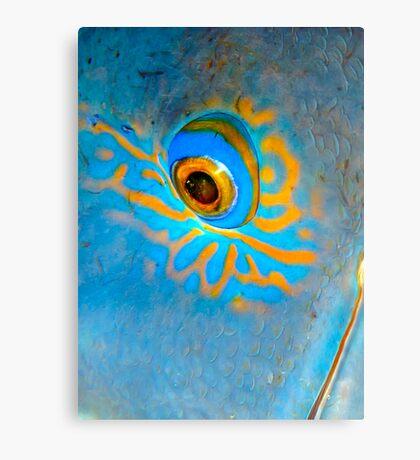 Blue Grouper Eye Canvas Print