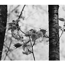 Petals in Black and White by Valeria Lee