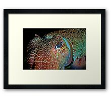 Giant Cuttlefish Framed Print