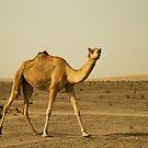 Desert Ship by Joseph Najm