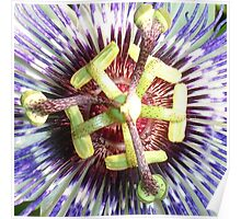 Close Up of The Centre Of a Passiflora Flower Poster