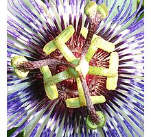 Close Up of The Centre Of a Passiflora Flower Photographic Print