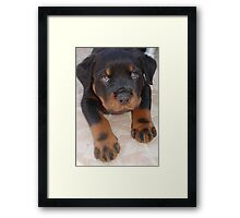 Rottweiler - Brown Eyed Boy Framed Print