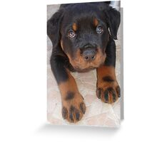 Rottweiler - Brown Eyed Boy Greeting Card