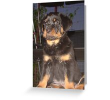 Rottweiler on Night Duty Greeting Card