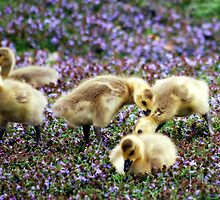 Mom - he's picking on me!!! the gosling series by Michelle BarlondSmith