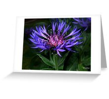 True Blue! - Scabious! Greeting Card