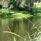 Green River Bank by Katerina Down