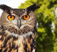 owl by wendywoo1972