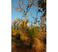 Evening bushland Photographic Print