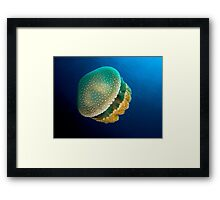 Adorable Jellyfish