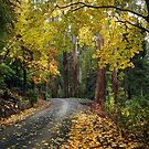 Autumn Road by Annette Blattman