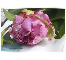 Popping pink peony Poster